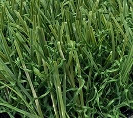 Pet Grass PetPRO Plus 40s